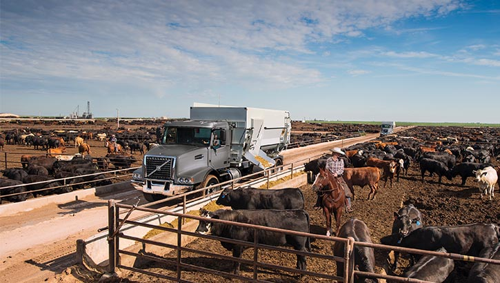 Volvo Trucks VHD passing through a dairy farm